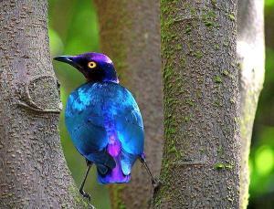 bluee bird